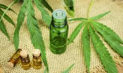 Cannabisolie mod PTSD